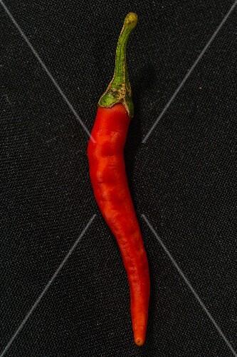 A Purple Cayenne chilli pepper