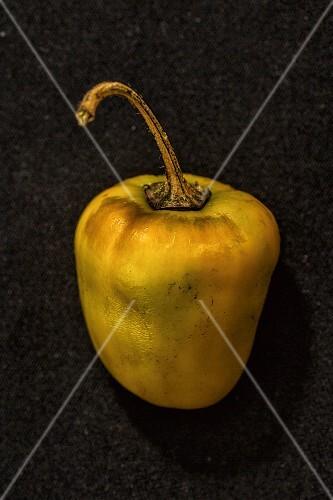 A Rocoto Yellow chilli pepper