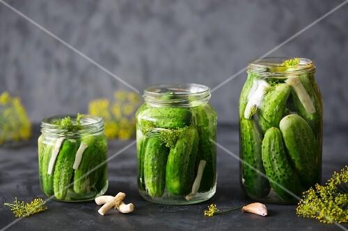 Three jars of gherkins with dill, garlic and horseradish