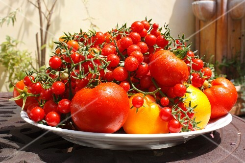 Freshly harvested tomatoes on a plate in a garden