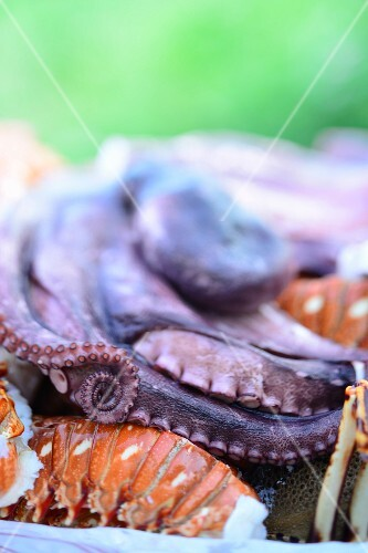 Octopus and lobster on a Caribbean buffet (close-up)