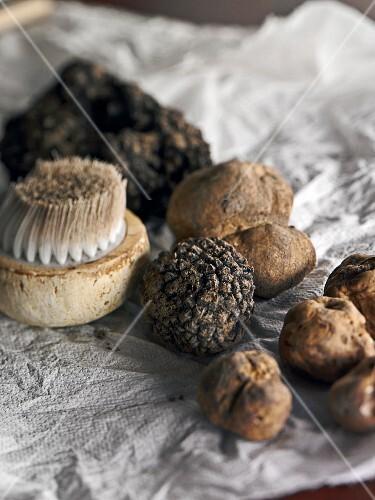 White truffles and summer truffles