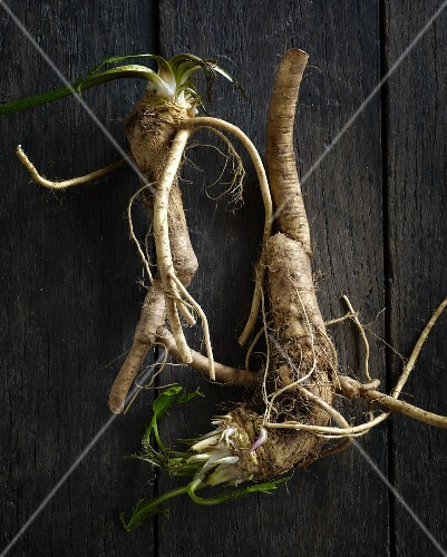 Horseradish roots on a wooden surface (seen above)
