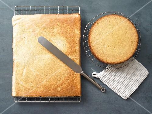 Sponge cake bases made with spelt flour