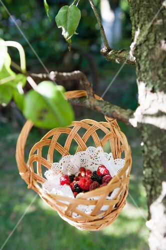 Freshly picked wild berries in a basket hanging from a tree