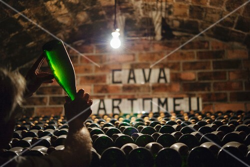 Jaume Gramona in his cava cellar at the Gramona winery (in El Penedes, Spain)