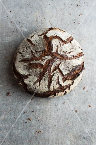 Tourte Auvergnate (French sourdough rye bread)