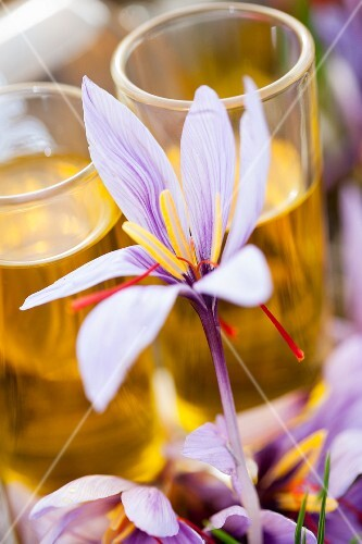 A saffron flower with dissolved saffron in glasses in the background