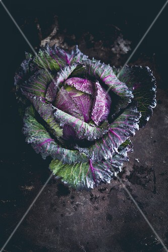 A red cabbage (seen from above)