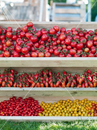 Assorted tomatoes in wooden trays