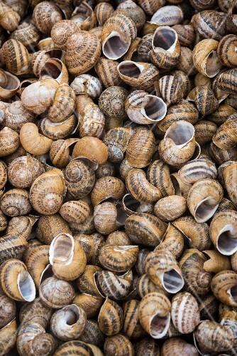 Lots of empty snail shells (full-frame)