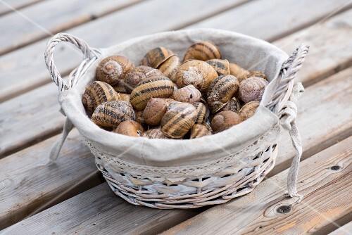 Empty snail shells in a wicker basket