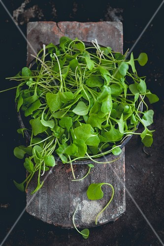Purslane in a bowl (seen from above)