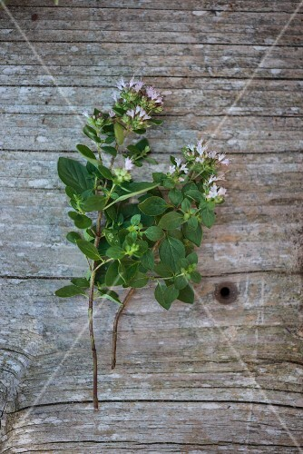 Flowering thyme on a wooden surface