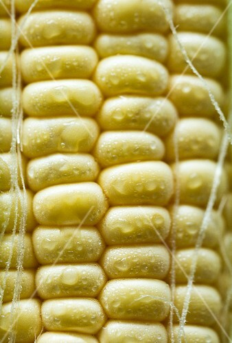 Corn on the cob with water droplets (close-up)