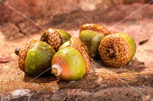 Five acorns on a stone floor
