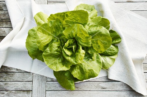 Oak leaf lettuce (topic: light suppers)