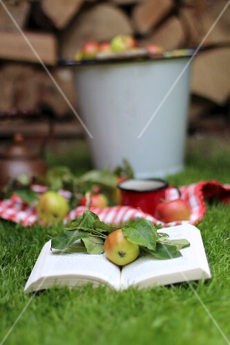 A book and wild apples on grass in front of a pile of logs