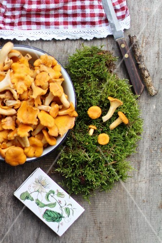 Freah chanterelle mushrooms with moss on a wooden background
