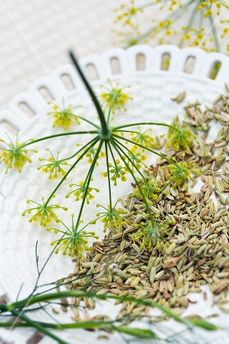 Fennel seeds and flowers on a ceramic plate