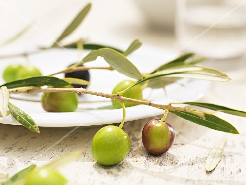 A branch with fresh olives on a plate
