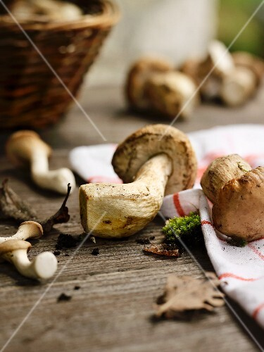 Fresh porcini mushrooms on a wooden table