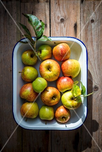 Fresh organic apples in an enamel dish on a wooden surface (seen from above)