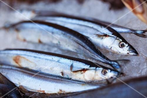 Fresh sardines at a market