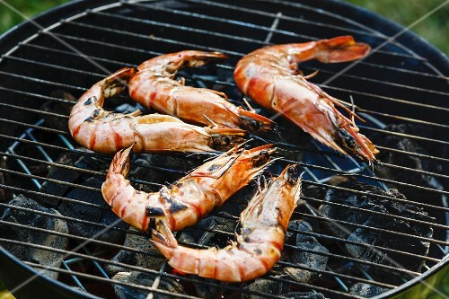 Grilled king size Prawns on grill BBQ background