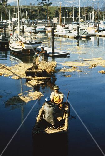 Oil Spill Cleanup,Santa Barbara,1969