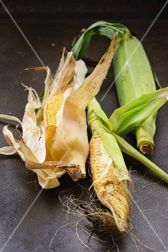 Organic garden vegetables: fresh young corn cobs with leaves