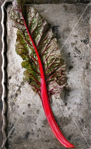 A leaf of red-stemmed chard on an old metal surface