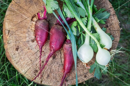 Fresh beetroots, parsley and onions on a tree stump