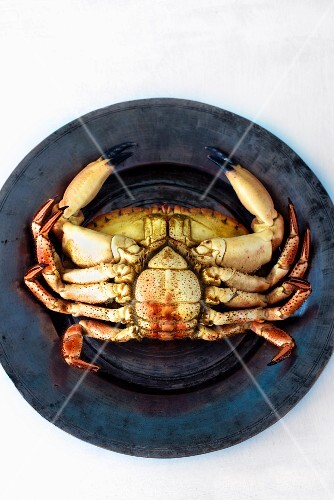 A crab (upside down) on a tin plate (seen from above)