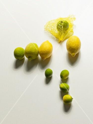Several organic lemons and limes