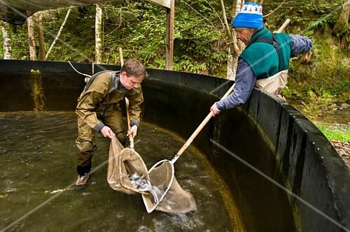 Fish hatchery,endangered coho salmon