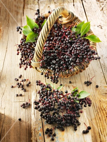 Freshly picked elderberries in a basket on a wooden surface