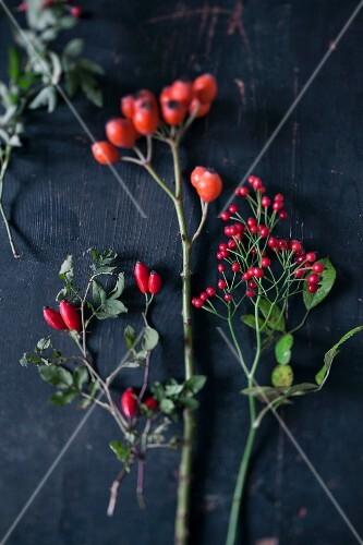 Sprigs of various rose hips on black background