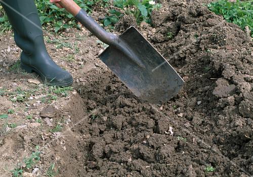 Lieblings Beet umgraben 3. Step: Spaten mit Erde … – Bild kaufen - 12128264 #QT_32