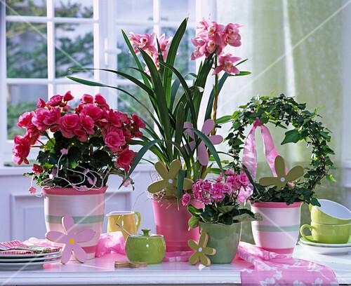 Arrangement Von Pflanzen Die Wenig Bild Kaufen 12136444