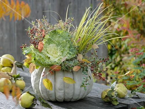 Bepflanzter Weißer Kürbis Mit Zierkohl Bild Kaufen 12159512