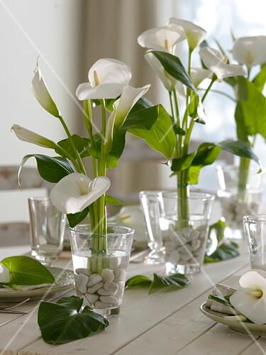 Weisse Tischdeko Aus Zantedeschia Bild Kaufen 12162202
