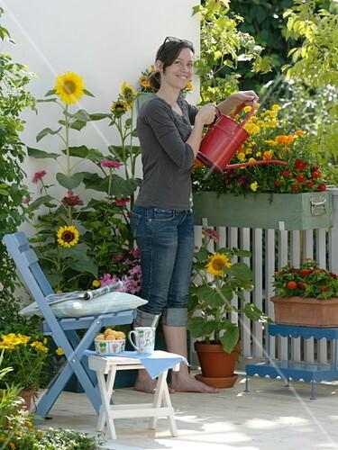 sommerblumen balkon mit gelb rotem aussaat kasten bild kaufen friedrich strauss. Black Bedroom Furniture Sets. Home Design Ideas