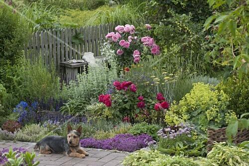 Klettergerüst Rosen : Kräuterbeet mit rosen u2013 bild kaufen 12173616 ❘ friedrich strauss