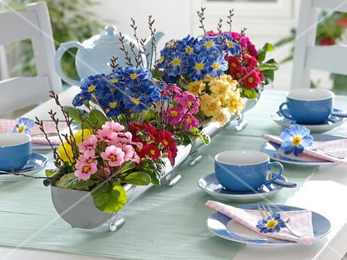 Primel Tischdeko Mit Bepflanzten Bild Kaufen 12178640