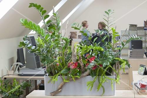 pflanzen sorgen f r gutes raumklima im bild kaufen 12194556 friedrich strauss. Black Bedroom Furniture Sets. Home Design Ideas