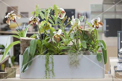 Pflanzen Sorgen Fur Gutes Raumklima Im Bild Kaufen 12194558