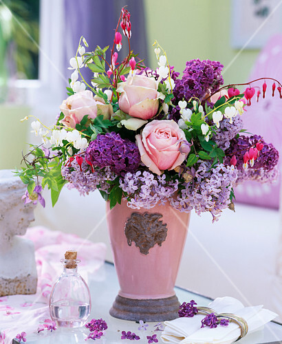 syringa flieder rosa rose dicentra bild kaufen. Black Bedroom Furniture Sets. Home Design Ideas
