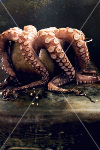 Fresh octopus in a bowl