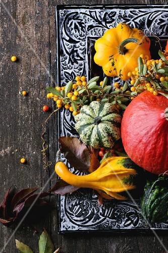 Herbstliches Stilleben mit Beeren, Speise- und Zierkürbissen
